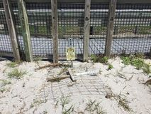 Turtle nesting. South Florida beach Stock Images