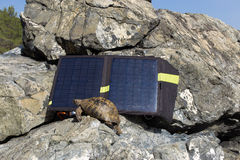 Turtle next to a solar panel. Royalty Free Stock Photos