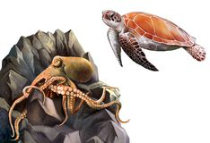 Turtle and Octopus in the rocks. Stock Photo