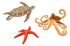 Turtle, octopus and starfish Royalty Free Stock Photography
