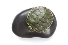 Turtle On Stone Stock Images