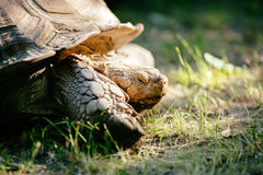 Turtle outdoors Royalty Free Stock Photography
