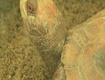 Turtle in the park. The turtle in the park stock footage