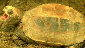 Turtle in the park stock video footage