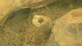 Turtle in the park stock footage