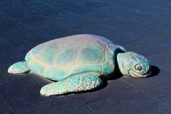 Turtle playground Royalty Free Stock Photography