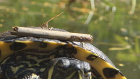 Turtle pond stock video