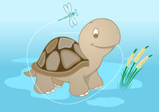 Turtle in pond Royalty Free Stock Images