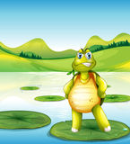 A turtle at the pond standing above a waterlily Royalty Free Stock Photo