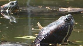 Turtle pond stock footage