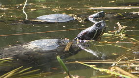 Turtle pond stock footage