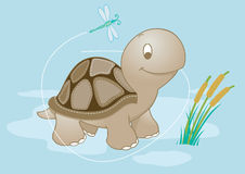 Turtle in pond. Royalty Free Stock Image