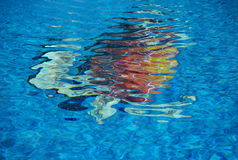 Turtle in pool. Turtle image in swimming pool stock photography