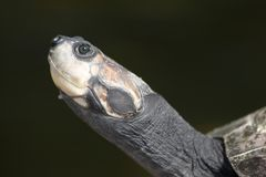 Turtle Portrait Stock Images