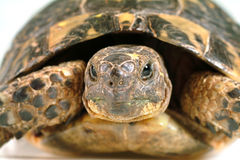 Turtle portrait. Closeup on a turtles face royalty free stock image