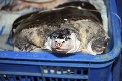 Turtle at Qinping Market, Guangzhou, China. Turtle at Qinping Market in Guangzhou, China Royalty Free Stock Image