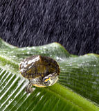 Turtle in the rain Royalty Free Stock Images