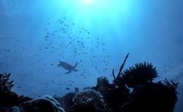 Turtle Reef Stock Photos