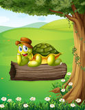 A turtle relaxing above the trunk under the tree Royalty Free Stock Images