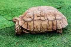 Turtle, reptiles animal Royalty Free Stock Photos