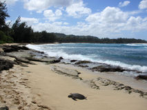 Turtle rest on beach as waves crash at Turtle Bay with trees lin Stock Images