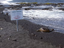 Turtle resting area - Hawaii Stock Photos