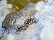 A turtle Stock Photo