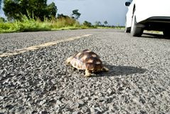 Turtle on the road Stock Photos