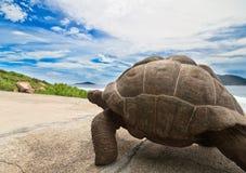 Turtle on road Stock Image