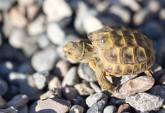 Turtle on rocks in nature Stock Photo