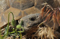 Turtle on the rocky and sandy desert. Gad Soaking up the sun. Stock Image