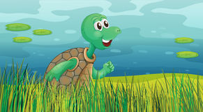A turtle running along the pond Royalty Free Stock Images