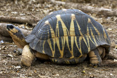 Turtle's earth in madagascar Stock Images