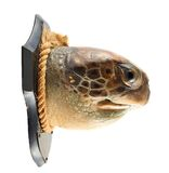 Turtle's head as a hunter's trophy Royalty Free Stock Image