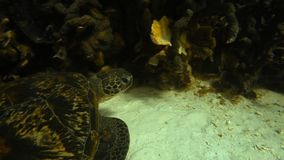 A turtle`s head underwater. A close up shot to a turtle`s head underwater stock video footage