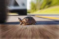 Turtle's last miss Royalty Free Stock Photo