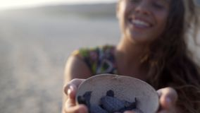 Turtle sanctuary. Happy women with flapping hair  show wooden bowl with newborn turtle,close up hands, turtle  sanctuary hatchery located on the beach stock footage