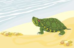 Turtle on the sandy shore Royalty Free Stock Photography