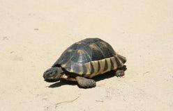 Turtle - Sardinia, Italy Stock Images