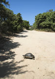 Turtle - Sardinia, Italy Stock Photos