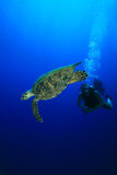 Turtle and Scuba Diver Royalty Free Stock Images