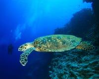 Turtle and Scuba Diver stock photo