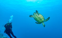 Turtle and Scuba diver with camera Royalty Free Stock Photos