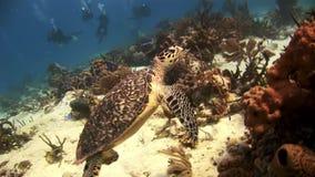 Turtle on the sea floor looking for food stock footage