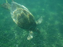 Turtle by the sea Royalty Free Stock Photos