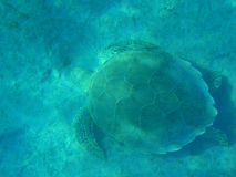 Turtle on seabed Royalty Free Stock Photography