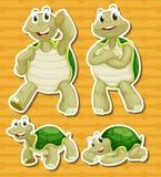 Turtle set Stock Photos