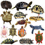 Turtle set Royalty Free Stock Images