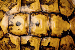 Turtle shell. Background texture detail royalty free stock images