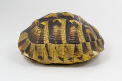 Turtle shell Stock Images